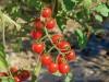 Việt Nam phát triển sản xuất phân bón hữu cơ để có nền nông nghiệp bền vững